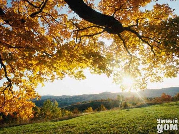 Отличного настроения этим солнечным утром!   #Музыка_утро@smart_home