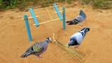 New DIY Simple a bird Trap using Small PVC Pipe - Learning to make bird trap with bamboo