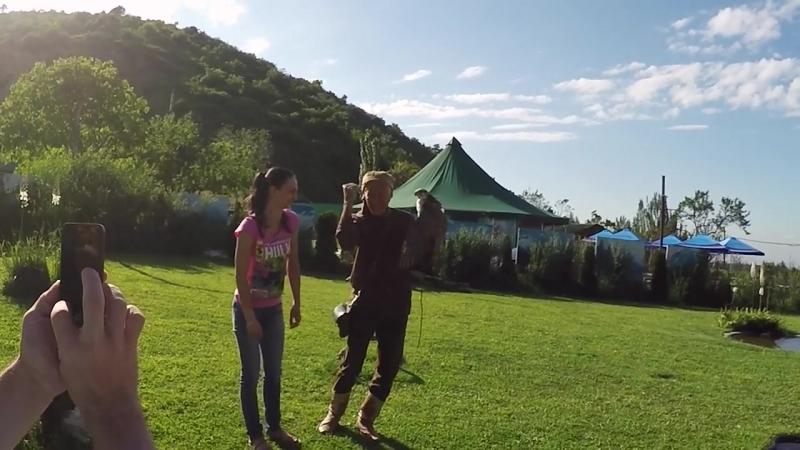 Шоу Ловчих Птиц в Алматы в питомнике Сункар Путешествия по Казахстану