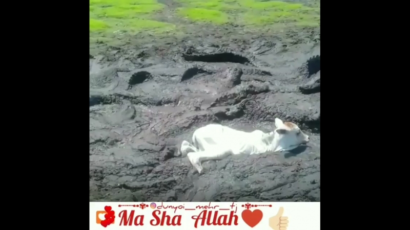 За доброе отношение ко всему живому тебе воздастся благом Ин ша Аллаh