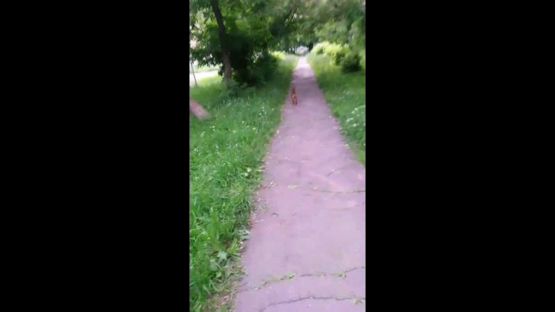 Жора - кузнечик ищет птичек в траве