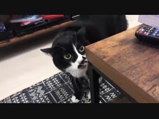 Когда кот учуял нестиранные носки