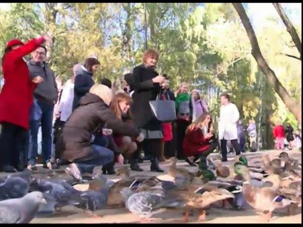 Утки отказываются улетать из Ярославля на юг