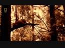 Медведи Путь эволюции грозного хищника Дикая природа Фильм Nat Geo Wild HD 31 01 2017