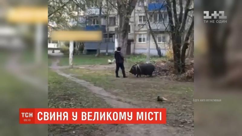 У столиці помітили жінку яка вигулювала свиню поблизу багатоповерхівок