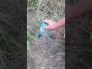 Спасатели ПАСС СК обнаружили в частном доме 12 змей