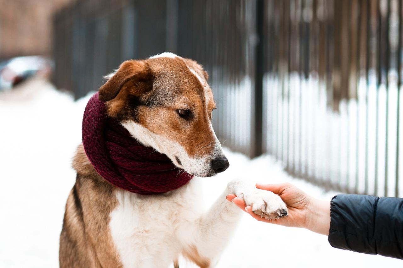 Список собак которые должны носить намордник по закону кемерово