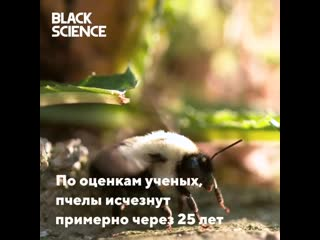 Пчёлы на грани вымирания