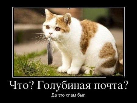 http://cs406731.userapi.com/v406731769/2faa/u_4mng8DVZ8.jpg