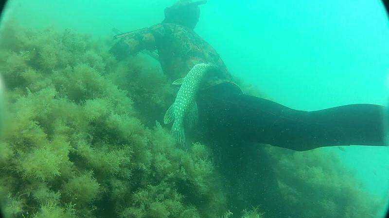 Подводная охота. Y@sh@. Орловка. 09.07.2012
