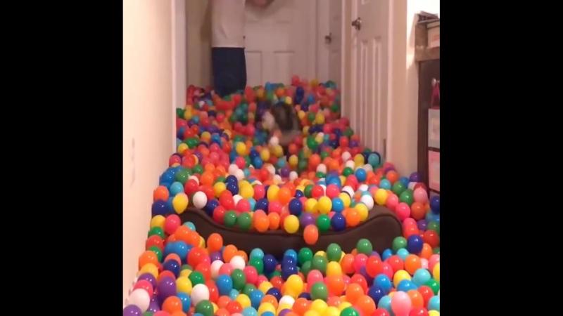 Пес и 5400 шариков (1080p).mp4
