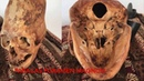 DNA Results Of The Paracas Elongated Skulls Of Peru Part 3 Physical Anomalies