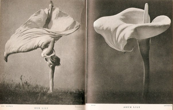 """""""Our Lily and Arum Lily"""" by Stefan Lorant, 1937."""