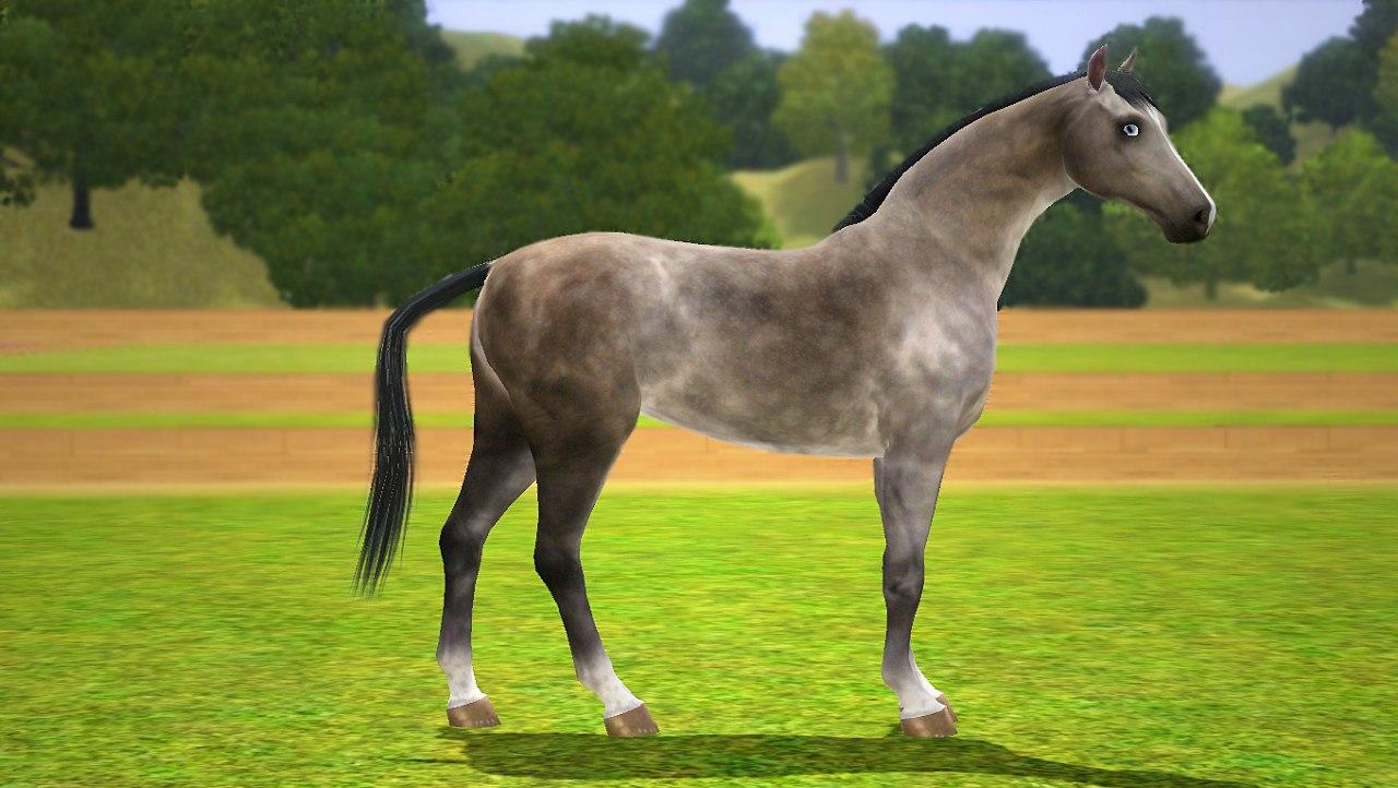 Регистрация лошадей в RHF 1.1 GvEK9CY7J3A