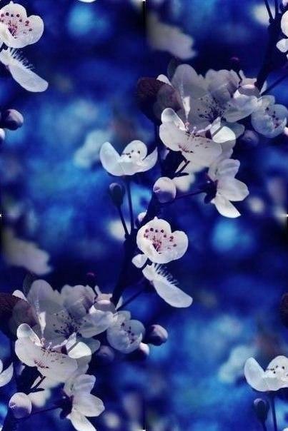 Цветочные и растительные фоны - Страница 2 Hyb1_YgHDAc