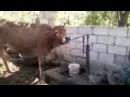 Azerbaydjan qorod Salyan selo Xalaj