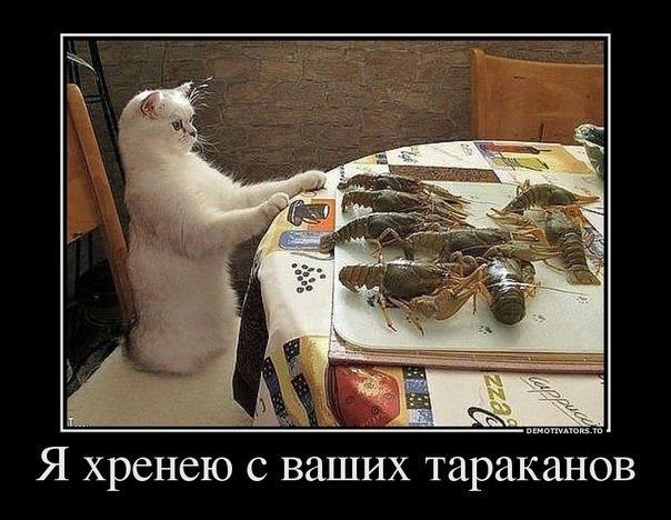 http://cs613530.vk.me/v613530435/344/bwmJLu2-xWg.jpg