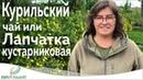 КУРИЛЬСКИЙ ЧАЙ (лапчатка кустарниковая).