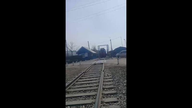 Снежа Тян - Live