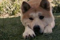 Хатико: Самый верный друг (Hachiko: A Dog's Story) - фильм HD качества 1920x1040