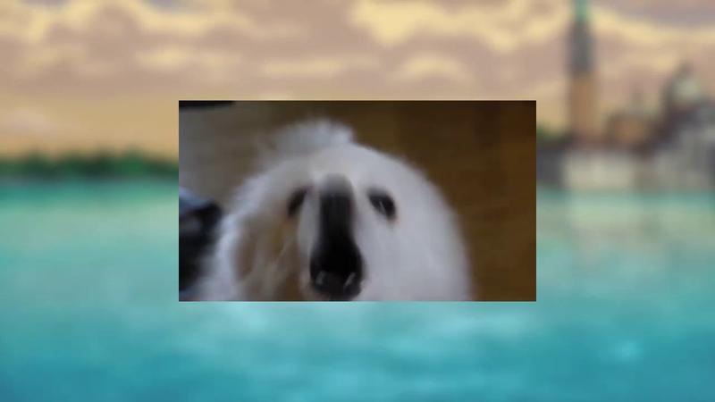 Gabe the Dog Traitor's Requiem