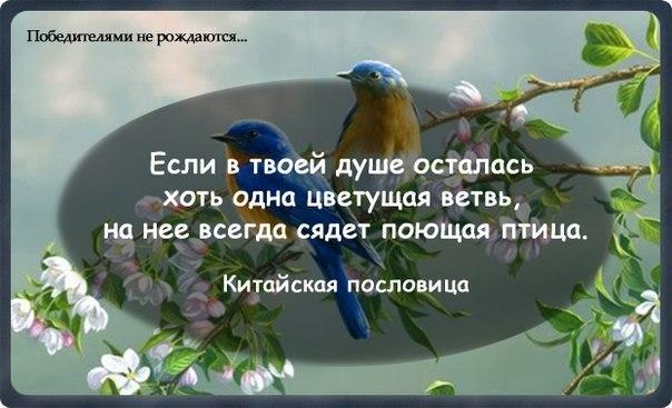 http://cs405429.vk.me/v405429485/935e/lfLvWyPloaQ.jpg