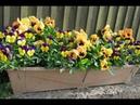 ТОП 10 лучших неприхотливых ОДНОЛЕТНИКОВ для балкона которые будут цвести все лето
