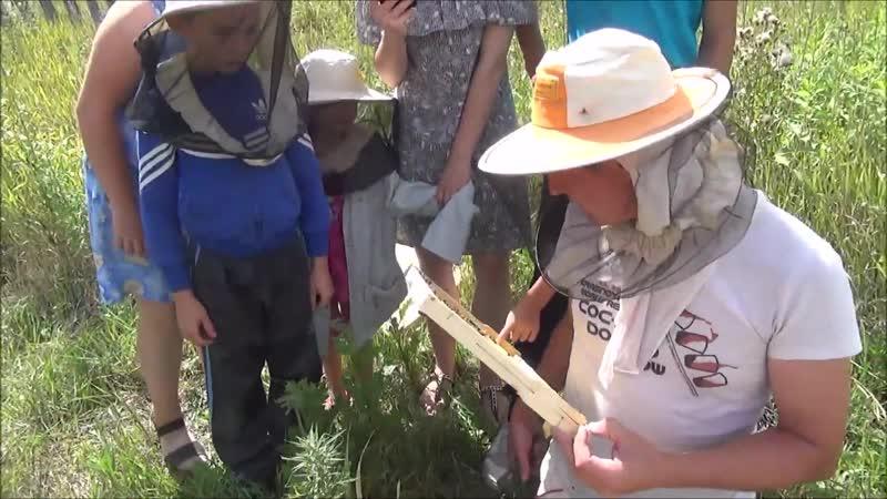 Экскурсия по пасеке для детей