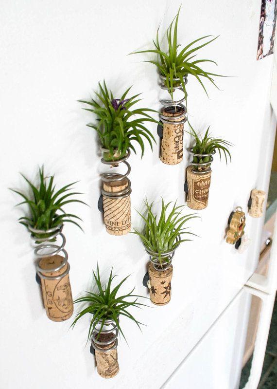 Атмосферные растения (тилландсия) W8uiP-XaYco
