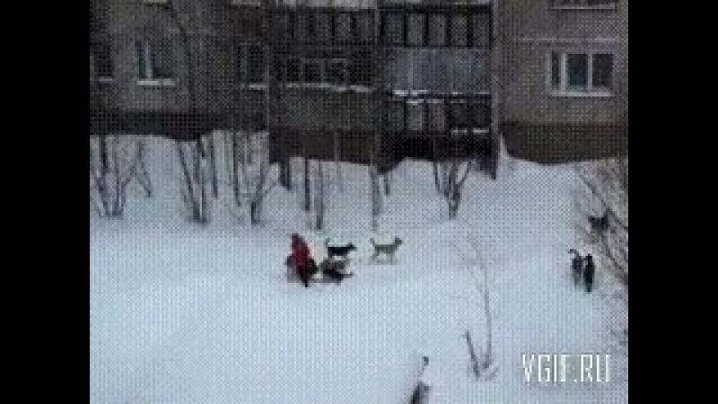 Дворник спас девушку от стаи собак