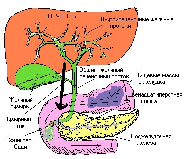 елисеева практика очищения организма