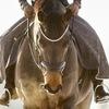 РДЮСШ по конному спорту Казань
