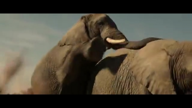 Братья ГримсбиВ вагине слонихи бывает нелегко