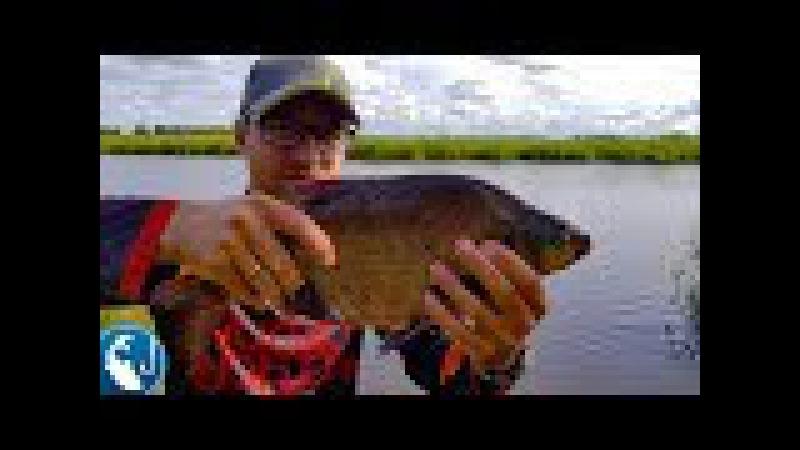 Ловля больших лещей в августе. Как поймать большого леща на канале на фидер | Рыб...