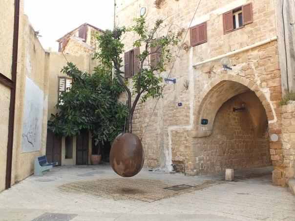 Такое необычное дерево можно увидеть, прогуливаясь по древним улочкам Яффо - старому городу близ Тель-Авива. Это не декорация. Апельсиновое дерево растет в горшке-яйце уже более 20 лет и исправно приносит плоды.