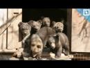 Детский сад для медвежат