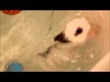 Кролики тоже плавают:S