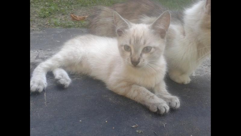 Дачные котятки 4