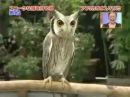 Funny Owl transformer