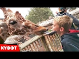 Funny Kids At The Zoo Giraffe Licks Boys Face!