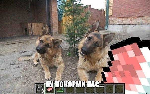 мега приколы: