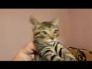 Красивые Котята в Добрые Руки Сочи Привезу по Большому Сочи Возможна отправка в Другой Город 89182070046