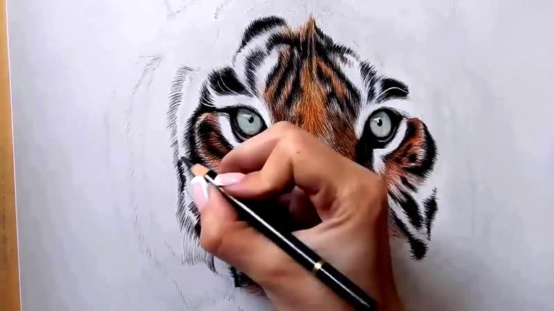 Drawing Tiger. How to draw the Tiger. Рисуем тигра цветными карандашами
