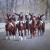 Спортшкола по конному спорту им. А.А. Магдалина