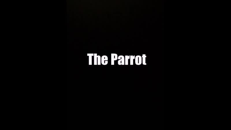 Parrot mimicking fire alarm
