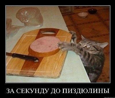 Я не против здорового способа жызни, но я конкре | ВКонтакте