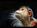 Территория заблуждений. 37. Происхождение человека. Эволюция и создание сверхлюдей. (21.09.2013)