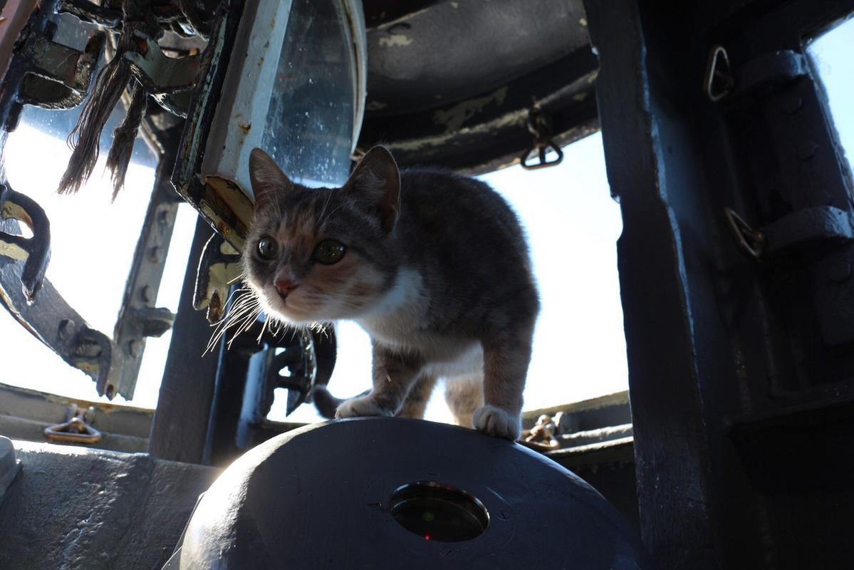 Кошка родила шестерых котят на подводной лодке.