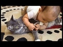 Funny Cats Annoying Babies and Babies Annoying Cats (PART 07) - Funny Cat VS Baby