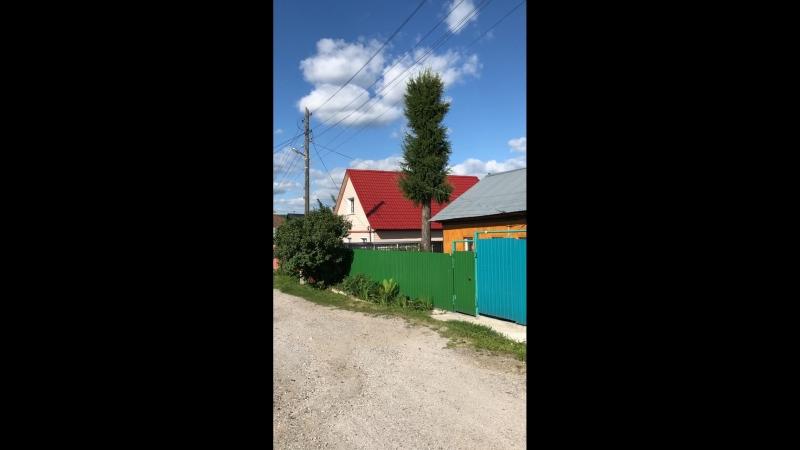 Сибирь кедр ель лиственница листвяк елкиуженете